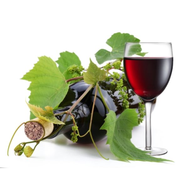 Vinske sorte vinove loze