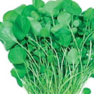 Kres salata
