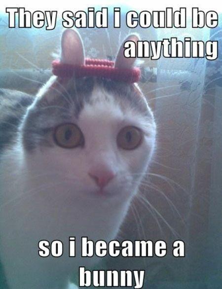 upload/slike/zid/top-25-best-funny-animal-memes-humor.jpg