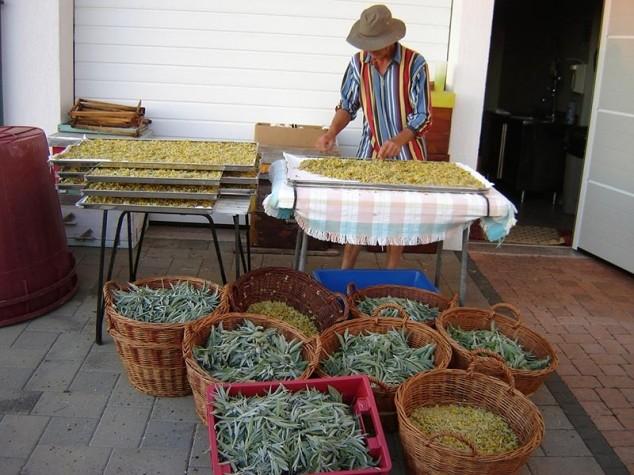 100 godina eko proizvodnje obitelji Kaštelan
