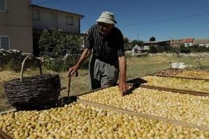 Kako prodati 80.000 tona mandarina?