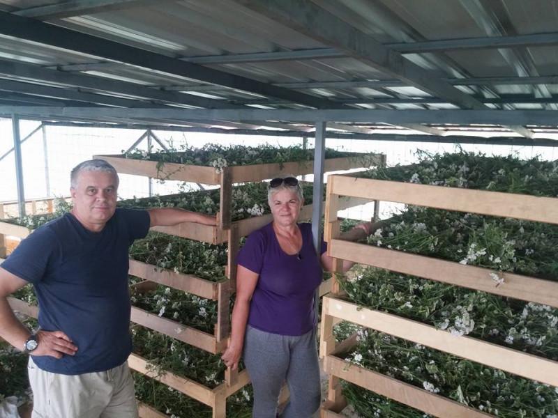 Ljekovito bilje iz Bihaća stiglo u Dubai i Abu Dabi