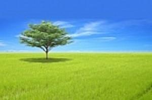 Gdje je tržište ekoloških proizvoda?