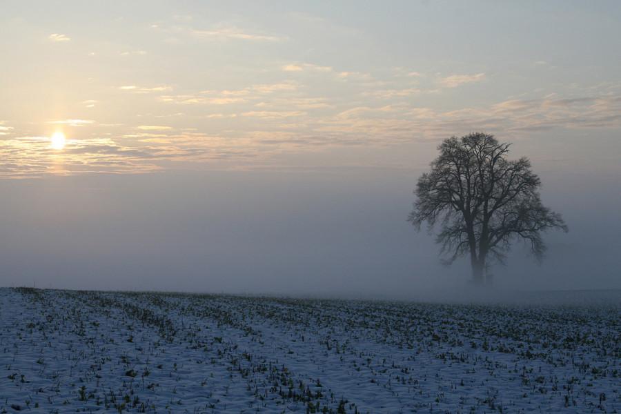 Sniježni pokrivač raste i štiti ozime kulture