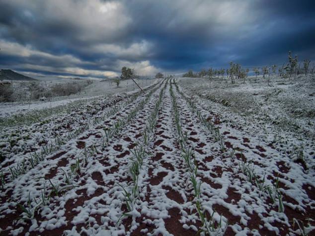 Hrvatskoj kronično nedostaje organskog povrća
