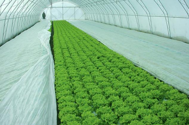 Zaštita povrća tokom zime