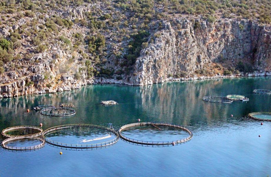Dubrovnik okuplja 1.000 stručnjaka iz akvakulture!
