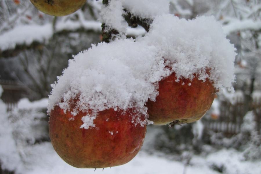 Vreme za zimski pregled voćaka