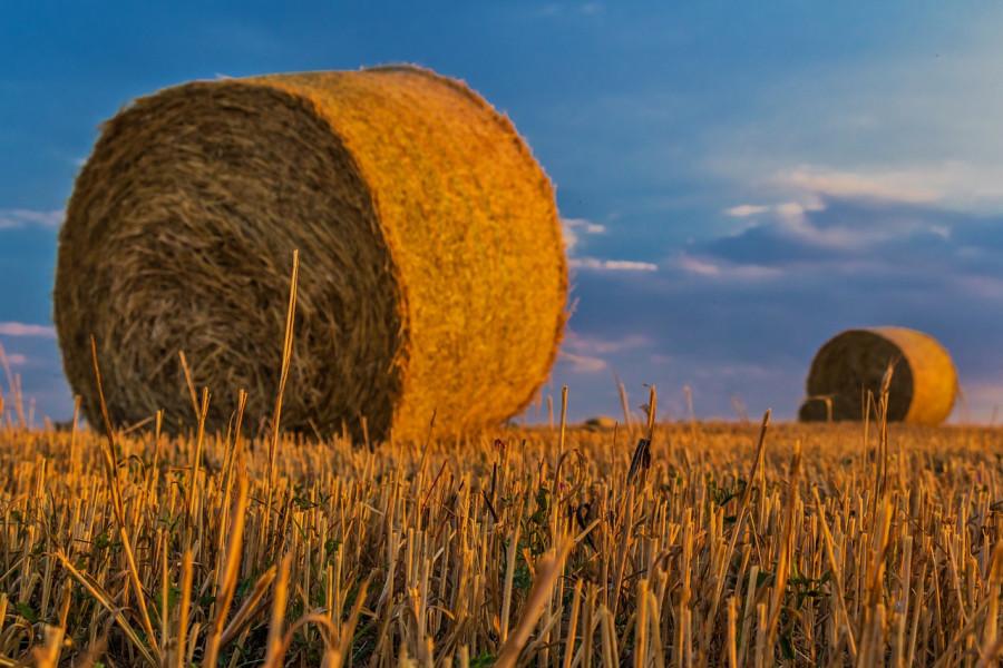 Digitalne ortofotokarte za evidenciju uporabe poljoprivrednog zemljišta