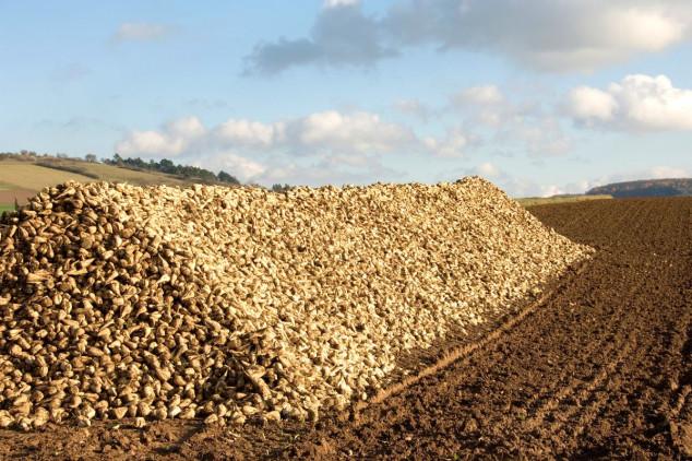 Očekuje se veća cijena šećera u EU