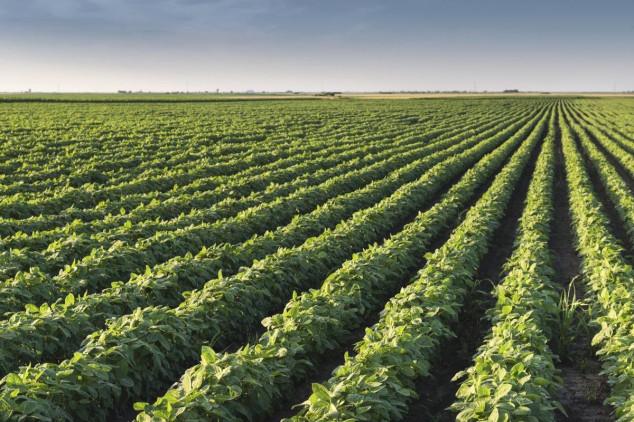 Zaštita soje od korova, bolesti i štetočina