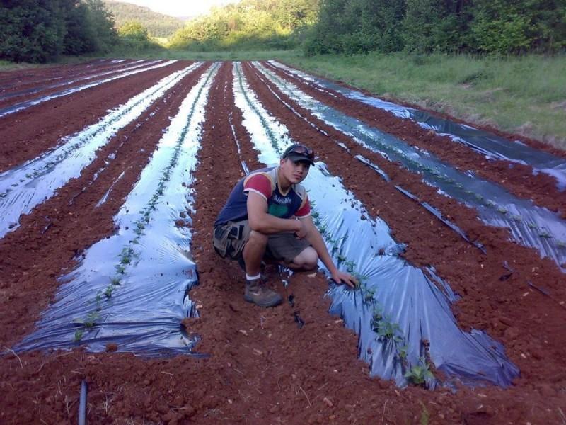 Idealno je vrijeme za sadnju batata