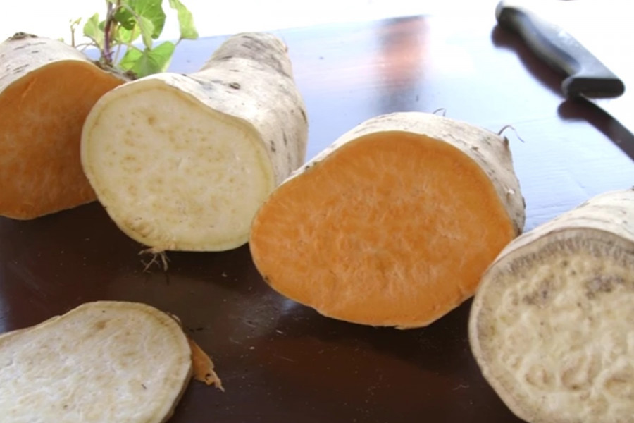 Svibanj je vrijeme sadnje batata!
