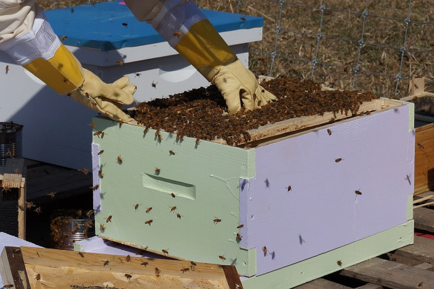 Pčelarima od Pokrajine 15 miliona dinara