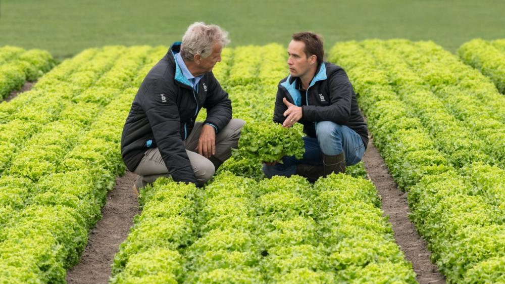 Bejo Zaden prvi ima sorte salata otporne na novu rasu plamenjače