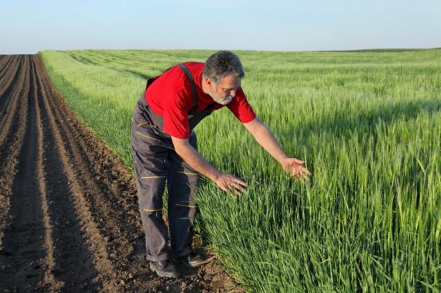 Inatreq™ Active - novi fungicid za strna žita!