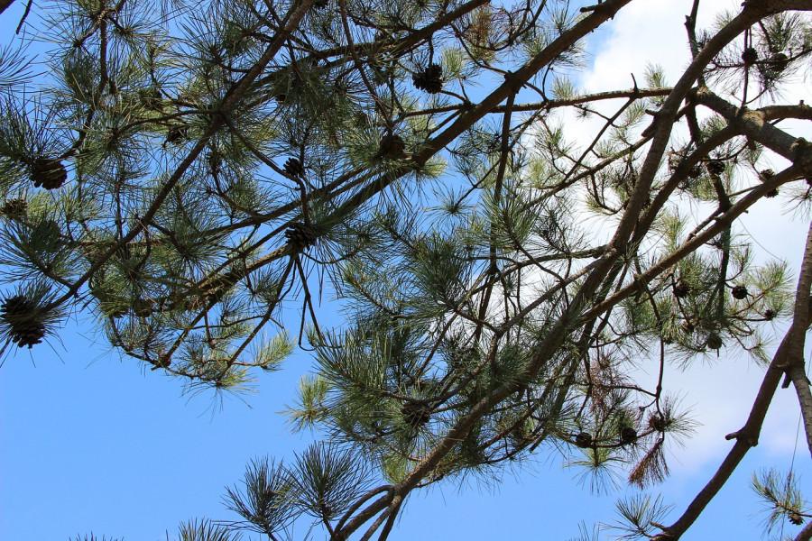 Anes Salman: Uredit ćemo šume na području Osanice