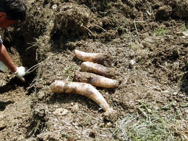 Gnoj iz roga za bolje prinose i aktivaciju tla!