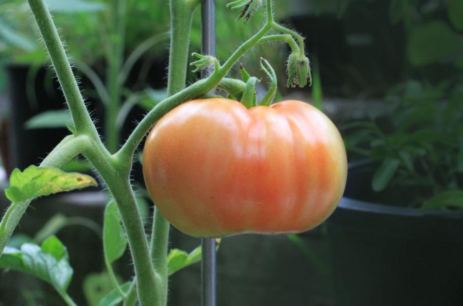 Spriječite bolesti povrća i voća u eko proizvodnji