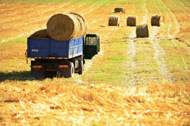 Kulture kratkih ophodnji dobar prihod za farmere
