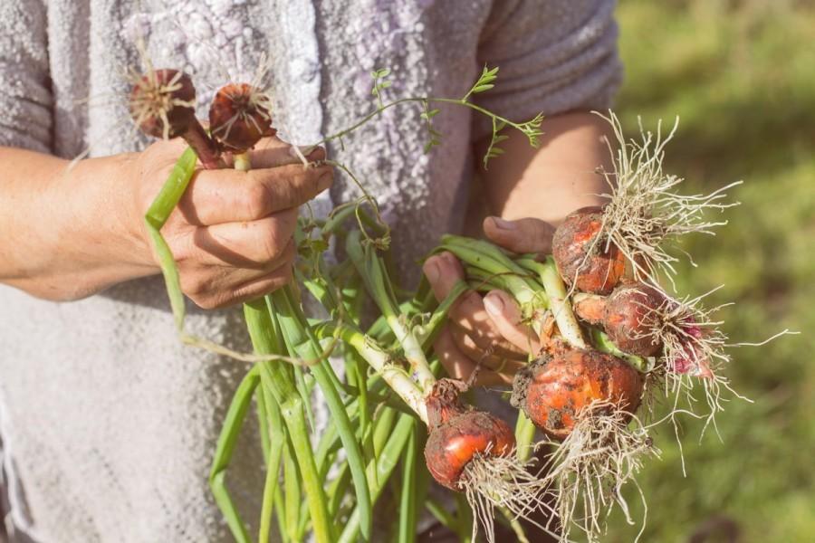 Eko rješenja za nametnike na lisnatom povrću