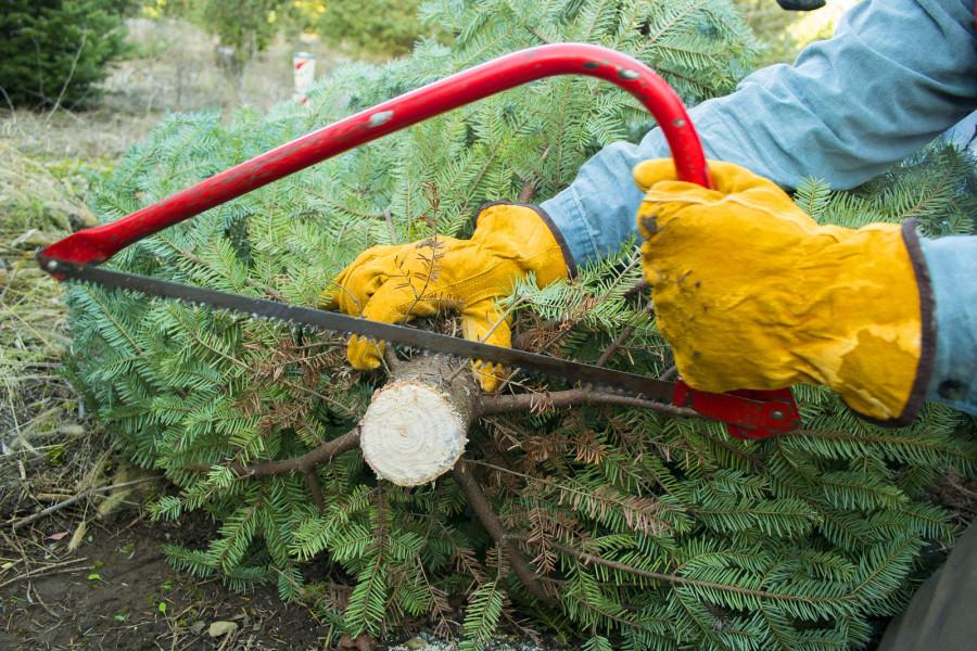Kako kompostirati ili reciklirati božićno drvce