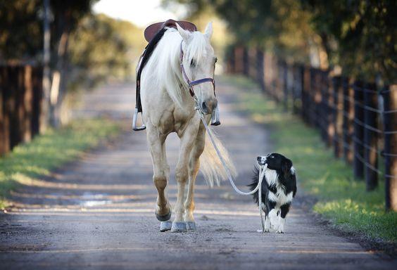 Border collie - genijalac u svijetu pasa