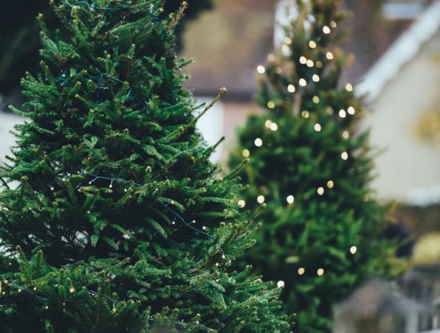 Kako odabrati novogodišnje drvo?