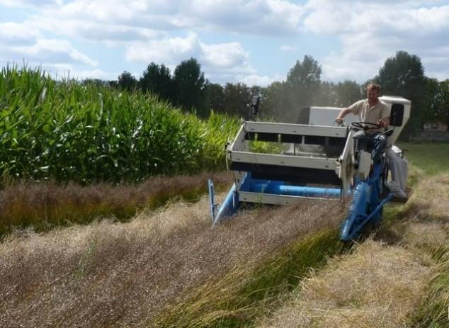 Lanolik: nova-stara uljarica pogodna za eko uzgoj!