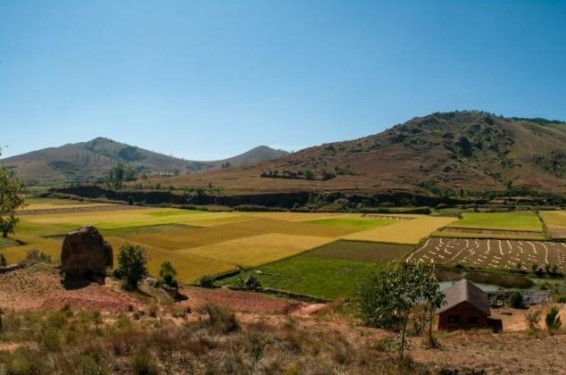 Prosječna cijena zakupa oranica 820 kn po hektaru!
