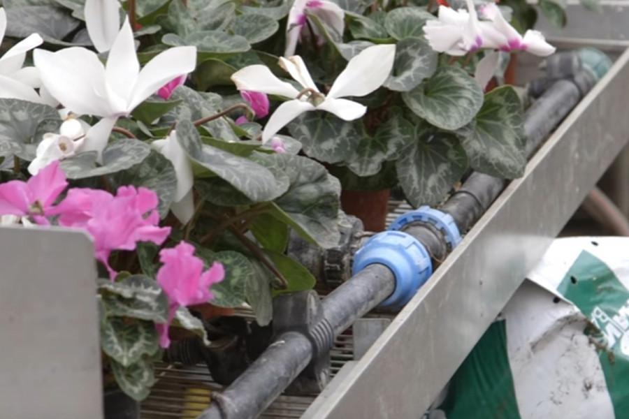Moderna cvećarska proizvodnja