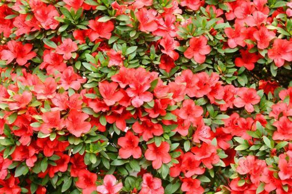 Kako odabrati sobne biljke