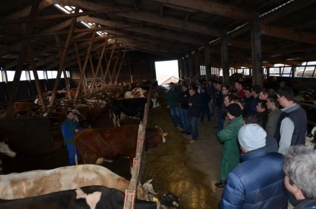Dan mladih uzgajivača goveda u Belici