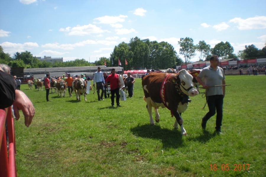 Dan stočara na Poljoprivrednom sajmu