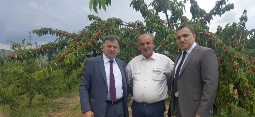 300 izlagača na 15. Danima trešnje u Mostaru