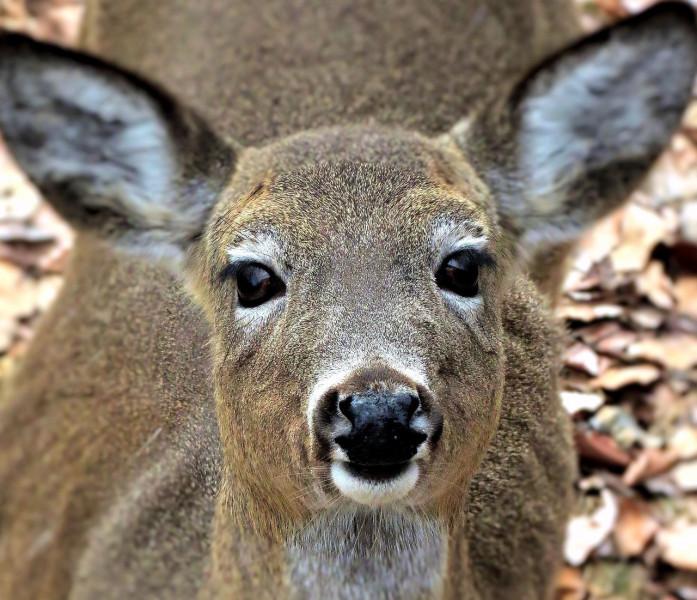 Javnost savjetuje o Zakonu o lovstvu