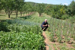 100 hortikulturnih vrsta Dražena Rančića
