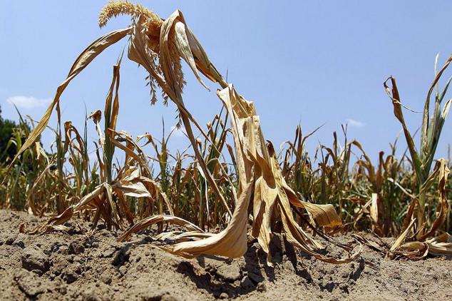 Šteta od suše u Srbiji preko milijardu evra