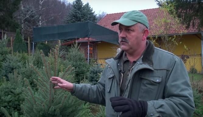 Kupci zahtijevaju domaća drvca s deklaracijom
