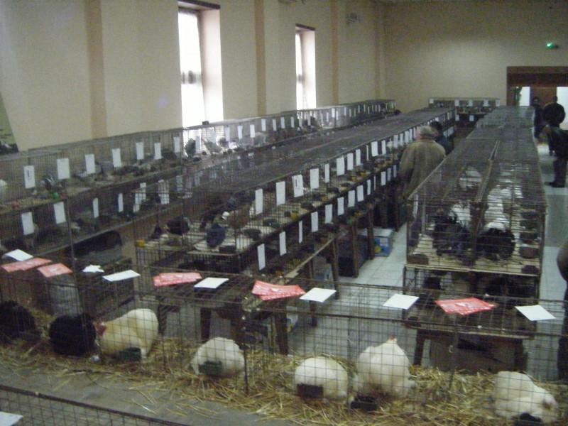 Izložba sitnih životinja održana u Obrovcu