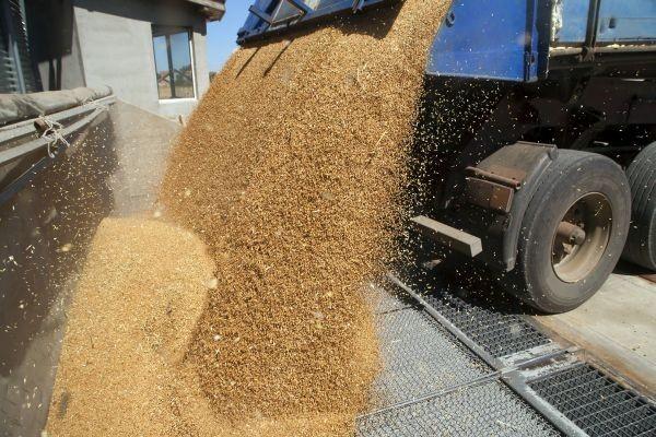 Rusija odobrila novi izvozni režim za pšenicu!