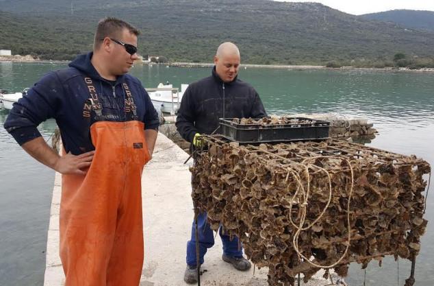Roneći bocu po bocu vina odnose u morske podrume
