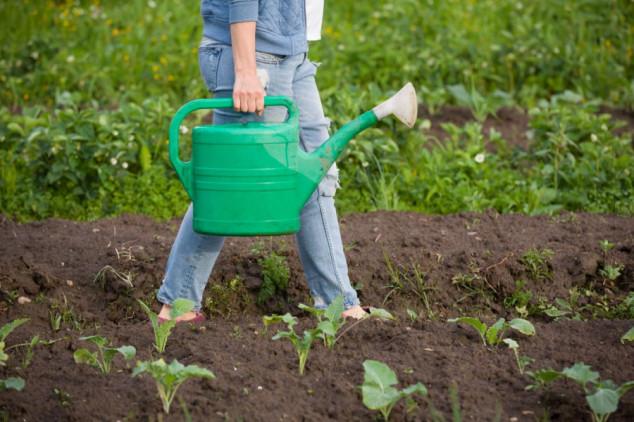 EGSO: ZP mora jačati ulogu žena u poljoprivredi