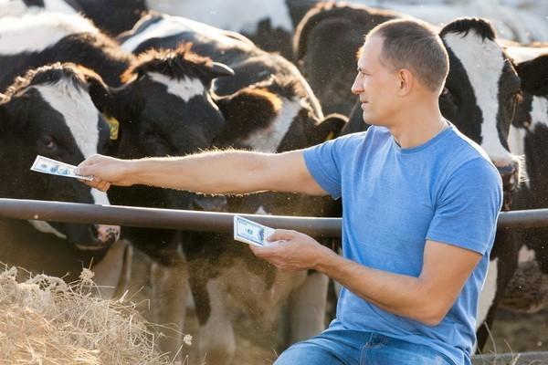 Zašto je toliko teško proizvesti organsko meso?