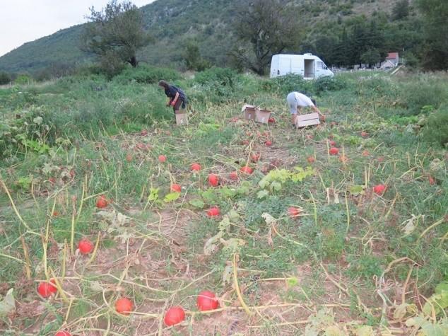 Kako eko proizvodnja potiče ruralni razvoj?