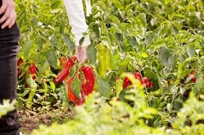 Potpora za proizvođače ekološke hrane u EU