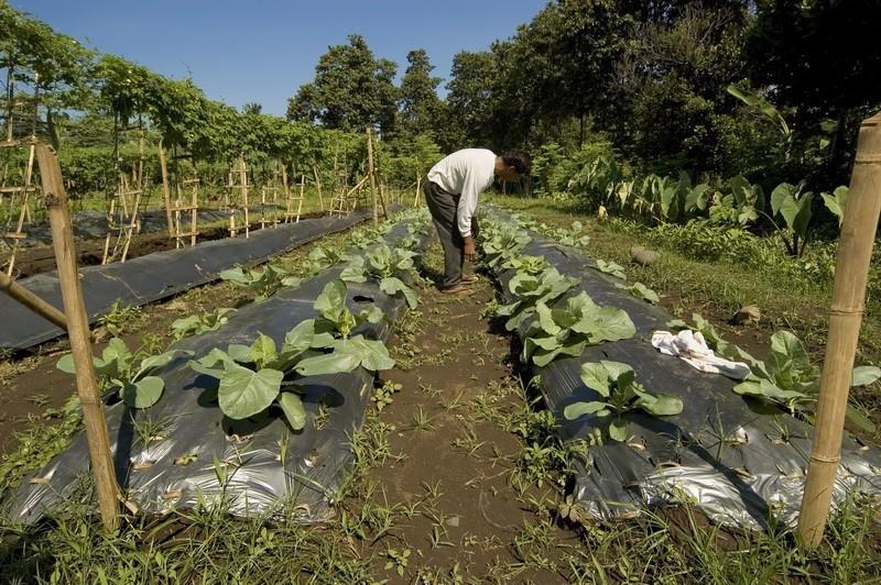 Drugačijom poljoprivredom protiv kolapsa