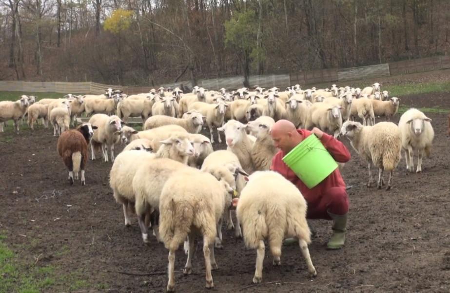 Osam godina bave se eko uzgojem ovaca, skuplje je no kvalitetnije