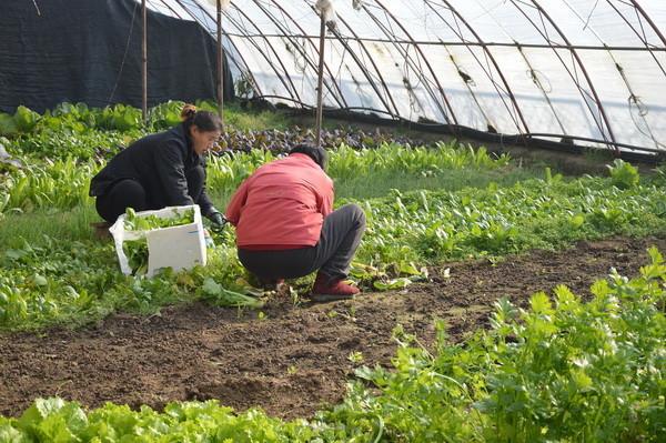 Plodored - najvažnija riječ u eko uzgoju povrća
