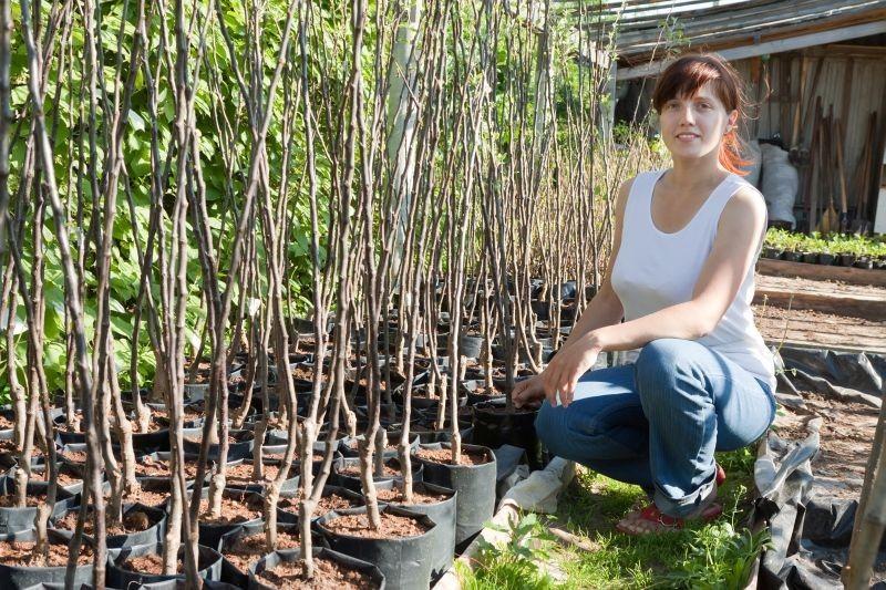 Ekološka zaštita u voćnjaku